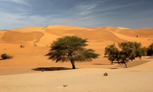 MAURETANIA / Adrar / gdzieś po drodze / Mauretańskie widoki