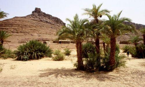 MAURETANIA / masyw Adraru / oaza Teizent / gaj palmowy w oazie