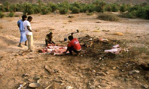 MAURETANIA / masyw Adraru / oaza Teizent / rzeźnicy oprawiajacy zabitego wielbłąda