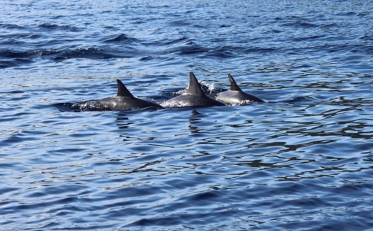Zdjęcia: Tamarin, Tamarin, Delfinki, MAURITIUS