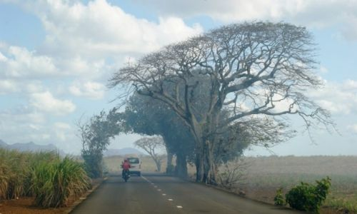 Zdjecie MAURITIUS / - / Mauritius / Mauritius