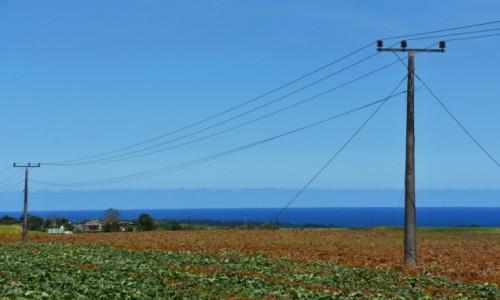Zdjęcie MAURITIUS / wchodnie wybrzeże / okolice Pointe du Diable / Błękity