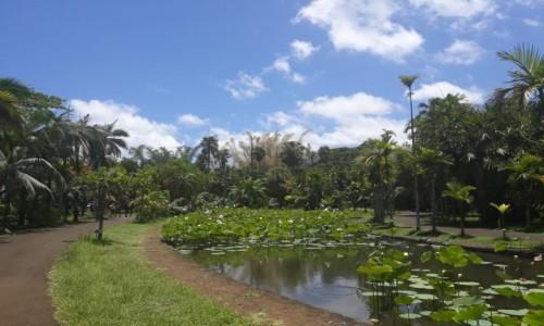 Zdjecie MAURITIUS / centrum wyspy / park botaniczny / rośliny wodne