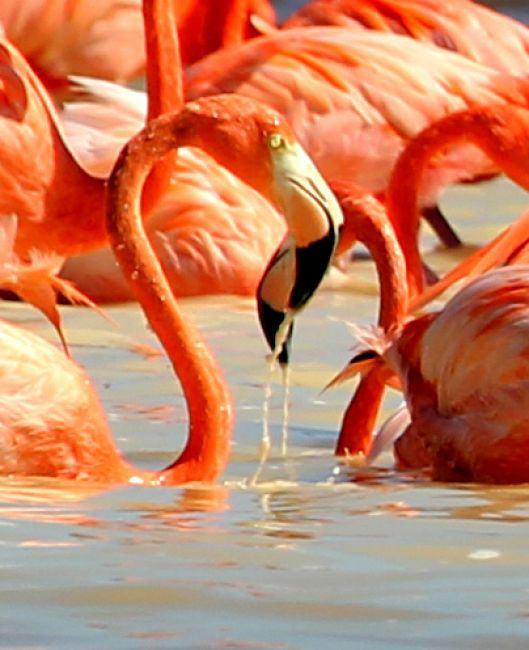 Zdjęcia: Zatoka Celestun, Klimaty zatoki , MEKSYK