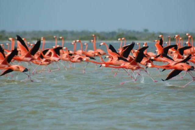 Zdj�cia: Rio Lagatros, Flamingi, MEKSYK