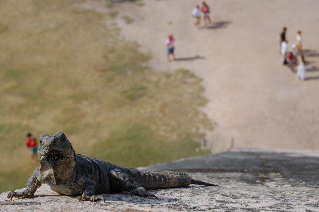 Zdjęcia: Chichen Itza, Półwysep Jukatan, Wiekowa jaszczurka , MEKSYK