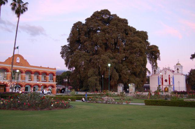 Zdjęcia: Santa Maria del Tule, Oaxaca, Drzewo Tule, MEKSYK