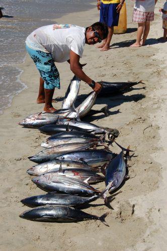 Zdjęcia: Puerto Escondido, Połowy, MEKSYK
