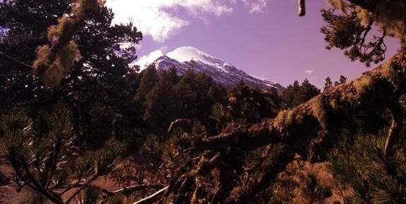 Zdjęcia: Pico de Orizabe, Pico de Orizabe, stoki porasta stary iglasty drzewostan, MEKSYK