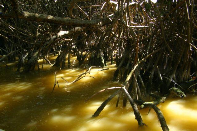 Zdjęcia: Celestun, las namorzynowy, MEKSYK