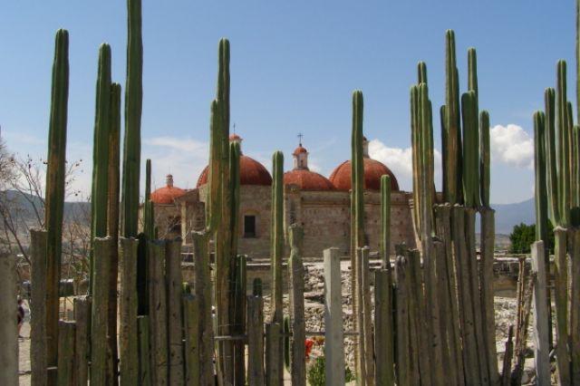 Zdjęcia: Mitla, kaktusowy żywopłot, MEKSYK