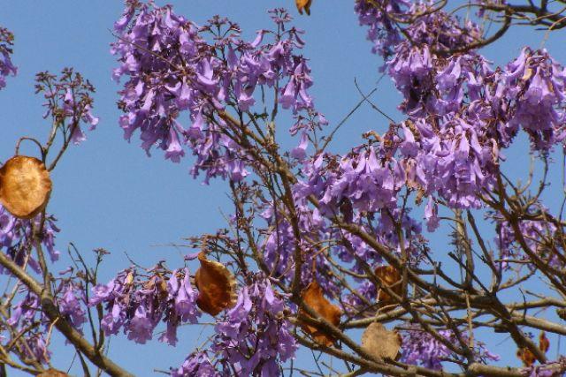 Zdjęcia: Monte Alban, A co to za drzewko?, MEKSYK