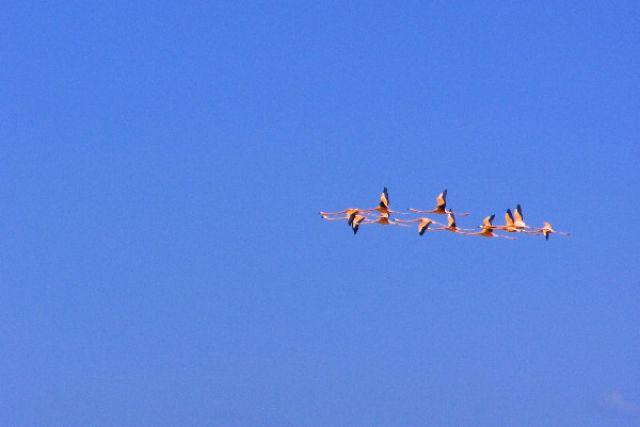Zdjęcia: Celestun, lecą flamingi, MEKSYK
