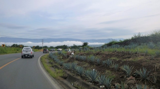 Zdjęcia: Tequila, Jalisco, Pola Agawy, MEKSYK