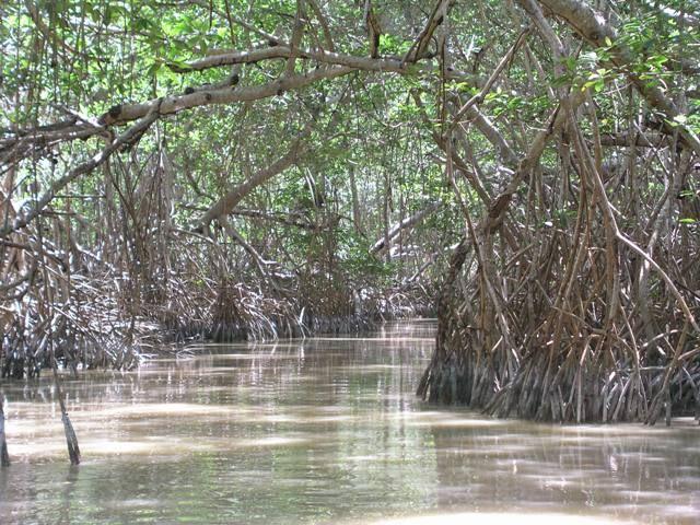 Zdjęcia: Rezerwat ptaków, Jukatan, Jak w Anakondzie ;), MEKSYK