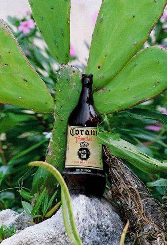 Zdjęcia: gdzieś pod barem, jukatan, po piwie w głowie sie kiwa.., MEKSYK