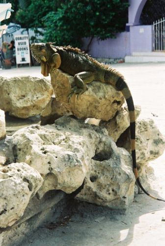 Zdjęcia: Playa del Carmen, Maskotka przed sklepem w Playa del Carmen, MEKSYK