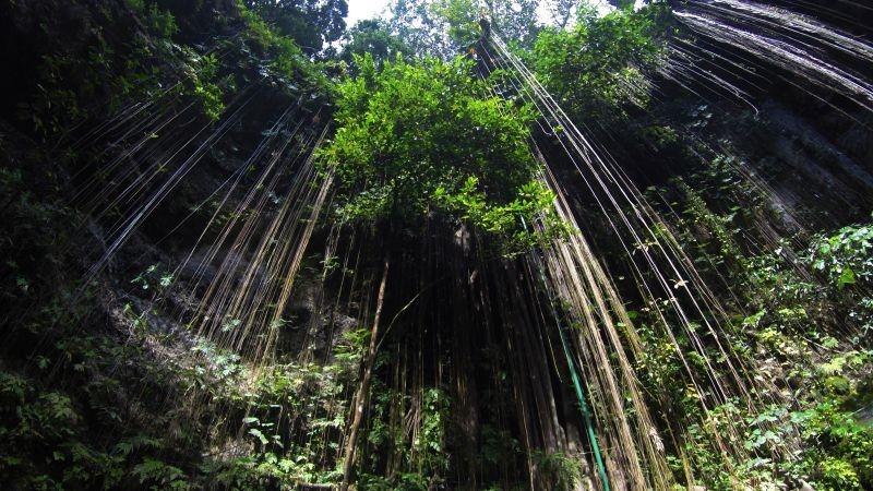 Zdjęcia: IK-KIL, Chichen Itza, Cenote IK-KIL, MEKSYK