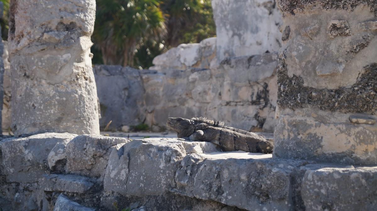 Zdjęcia: Tulum, Tulum, Strażnik przeszłości, MEKSYK