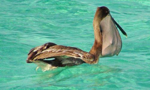 Zdjęcie MEKSYK / Jukatan / Wioska Puerto Morelos / Karaibskie klimaty cd.