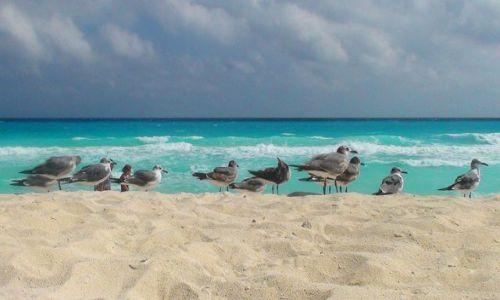 Zdjęcie MEKSYK / Jukatan / Cancun / Karaibskie klimaty cd.
