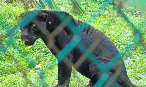 Zdjecie MEKSYK / Wyżyna meksykańska / Park La Venta / Meksykańskie zwierzaki