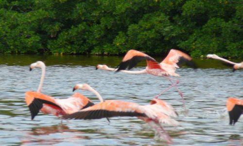 Zdjecie MEKSYK / Yucatan / Rio Lagartos / los Flamingos