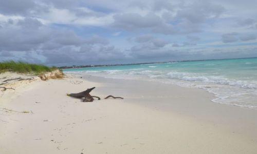 Zdjecie MEKSYK / Jukatan / okolice Playa del Carmen / Odcienie błękitu