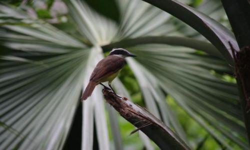 Zdjecie MEKSYK / Jukatan / Sian Khan / Drobiazg