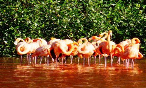 Zdjecie MEKSYK / Jukatan / Celestun / Laguna Celestun-rezerwat ptactwa