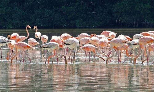 Zdjęcie MEKSYK / Jukatan / Celestun / Śniadanie