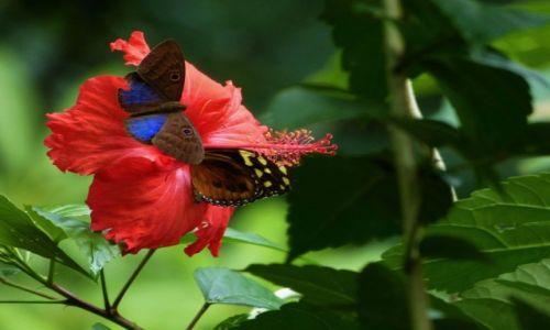 Zdjęcie MEKSYK / Chiapas / Agua Azul / Przy deserze