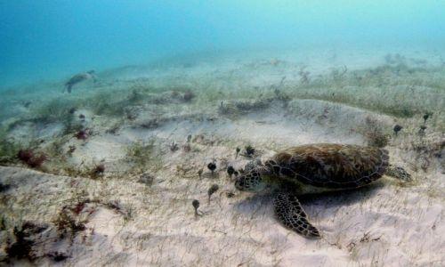 Zdjecie MEKSYK / Quintana Roo / Cancun / Podwodna ��czka