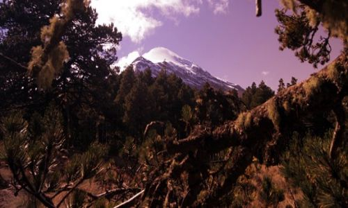MEKSYK / Pico de Orizabe / Pico de Orizabe / stoki porasta stary iglasty drzewostan