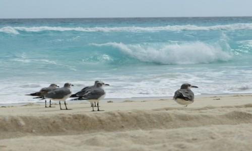 Zdj�cie MEKSYK / Quintana Roo / Cancun / Czekaj�c na Godota