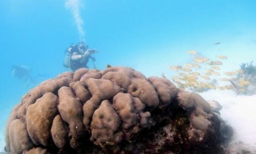 Zdjęcie MEKSYK / Jukatan / Cancun / Z archiwum X...