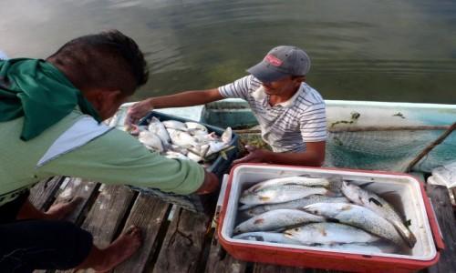 Zdjęcie MEKSYK / Campeche / Champoton / Dobry początek dnia