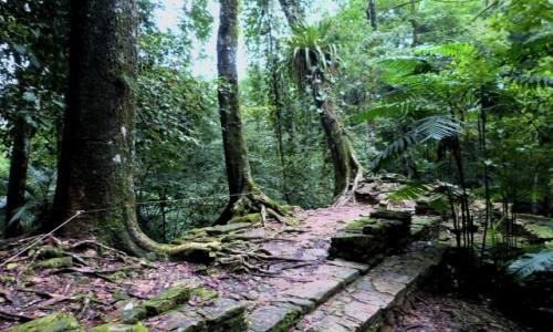 Zdjecie MEKSYK / Chiapas / Palenque / Na uboczu