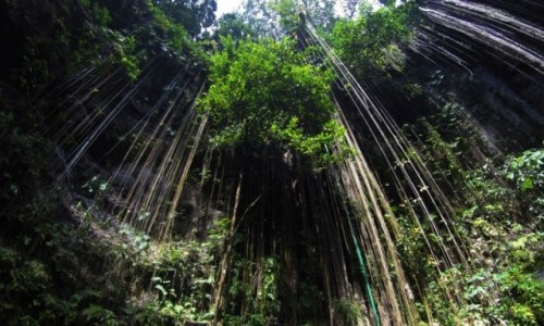 Zdjęcie MEKSYK / Chichen Itza / IK-KIL / Cenote IK-KIL