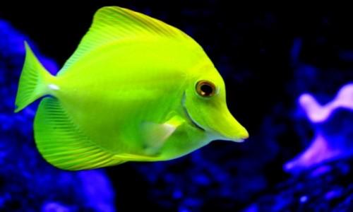Zdjęcie MEKSYK / - / Cancun / uśmiechnięta rybka:))