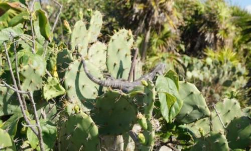 Zdjecie MEKSYK / Jukatan / Tulum / A mnie nie kłuje
