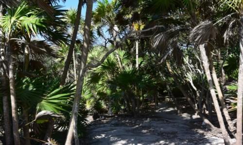 Zdjecie MEKSYK / - / Jukatan / Tropikalna roslinność w drodze do Cenot