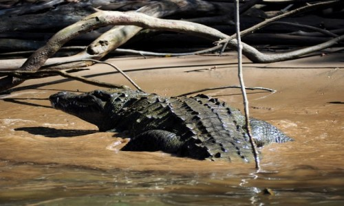 Zdjecie MEKSYK / Chiapas / Kanion Sumidero / Potwór z rzeki  Grijalava