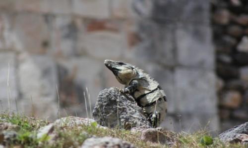Zdjecie MEKSYK / Jukatan / Jukatan / Tak mi dobrze...