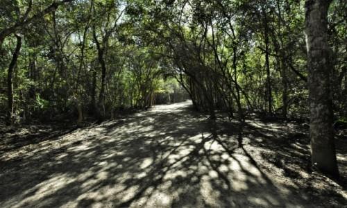 Zdjęcie MEKSYK / Jukatan / Coba / Coba, droga