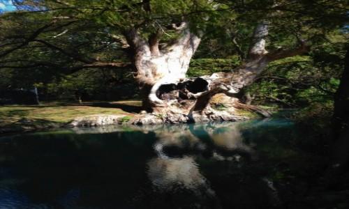 MEKSYK / Michoacan / Zamora / Jezioro Camecuaro