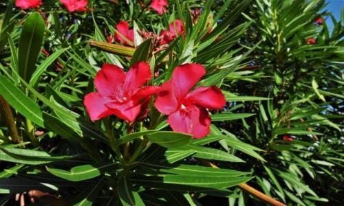 Zdjecie MEKSYK / Jukatan / Cancun / Lokalne kwiaty