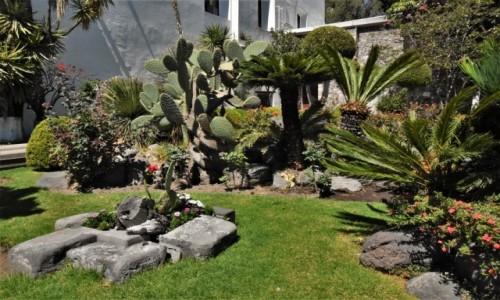 Zdjecie MEKSYK / Mexico City / Guadalupe / Guadalupe, miejscowe rośliny