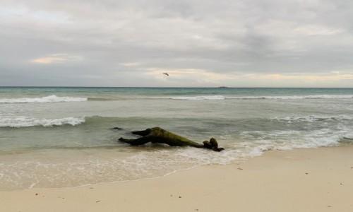 Zdjecie MEKSYK / Jukatan  / Playa del Carmen  / Meksykańska plaża