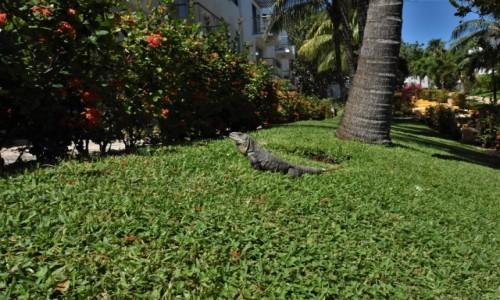Zdjęcie MEKSYK / Jukatan / Cancun / Cancun